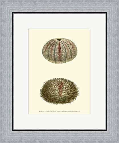 Jewels of the Sea IV by Frederick P. Nodder Framed Art Print Wall Picture, Flat Silver Frame, 18 x 21 inches - Nodder Jewels
