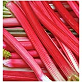"Rhubarb - Canadian Red - Rheum rhabarbarum - Super Heavy Crown/Roots - 6"" Pot - 1 Plant by Growers Solution"