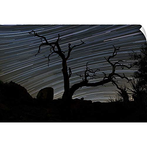 (CANVAS ON DEMAND Dan Barr Wall Peel Wall Art Print Entitled A Dead Pinyon Pine Tree and Star Trails, Joshua Tree National Park, California)