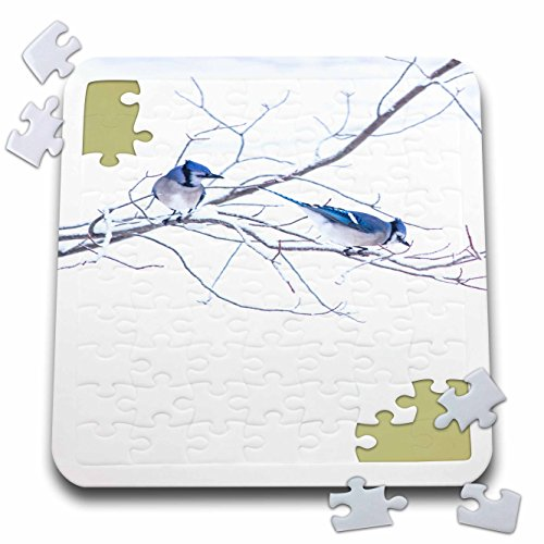 3dRose TDSwhite - Miscellaneous Photography - Blue Jays Bird Watching - 10x10 Inch Puzzle ()