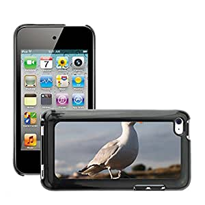Super Stella Slim PC Hard Case Cover Skin Armor Shell Protection // M00144471 Seagull Laridae Bird Plover Like // Apple ipod Touch 4 4G 4th