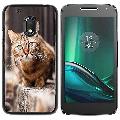 STPlus Gato en una caja Animal Carcasa Funda Rigida Para Motorola Moto G4 Play #1