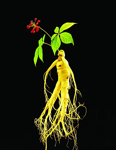 Ginseng Seeds 10+ Chinese Panax Ginseng Seeds Medicine Herbal Seeds,Asian Wild Planting