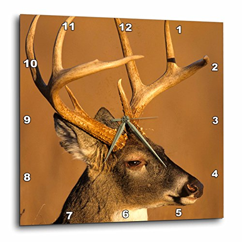 3dRose White-Tailed Deer, Great Smoky Mountains NP, Tennessee Wall Clock, 13 x 13