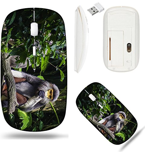 Liili Wireless Mouse White Base Travel 2.4G Wireless Mice with USB Receiver, Click with 1000 DPI for notebook, pc, laptop, computer, mac book douc langur monkey feeding Photo 19872519