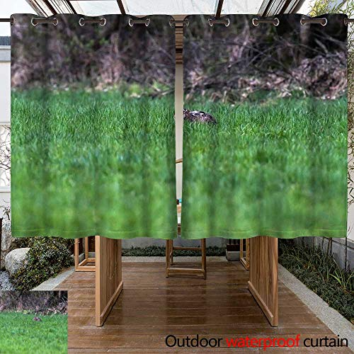 Curtains for Patio Waterproof Alert European Hare with flattened Ears Lying Down in Grass W63 x L72 ()