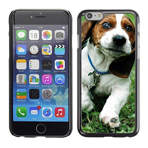 "Premio Sottile Slim Cassa Custodia Case Cover Shell // V00002900 Basset Artésien Normand // Apple iPhone 6 6S 6G PLUS 5.5"""