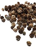 Serene Spaces Living Decorative Natural Miniature Pine Cones Pack, Perfect Holiday Décor, Fall, Winter, Christmas