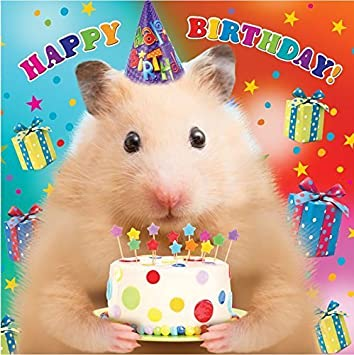 happy birthday from the hamster, card from the cat funny card from dog