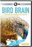 NOVA: Bird Brain