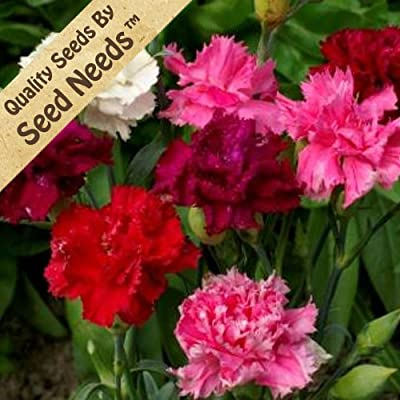"500 Flower Seeds, Carnation ""Enfant de Nice Mixture"" (Dianthus caryophyllus) Seeds By Seed Needs"