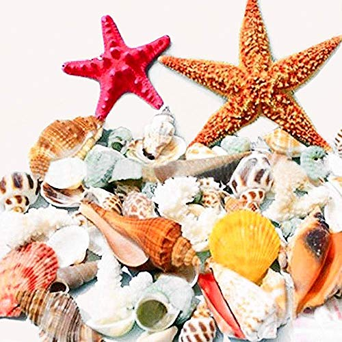 Anyumocz Sea Shells Mixed Beach Seashells- Natural Colorful Sea Shells Starfish Perfect for Candle Making,Home Decorations,Fish Tank and Vase Fillers,Beach Theme Party Wedding Decor, DIY Crafts