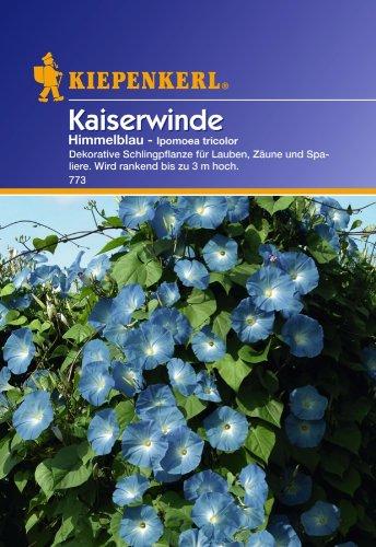 blau//gr/ün Sperli Blumensamen Kaiserwinde Ipomoea tricolor