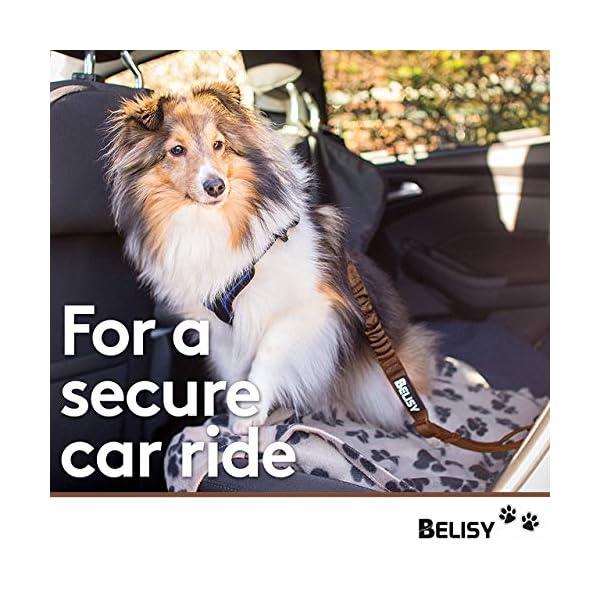 510a%2ByneLNL BELISY Hunde Sicherheitsgurt fürs Auto I maximale Sicherheit & Komfort I Blau