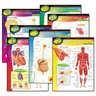 Learning Chart Combo Pack, The Human Body, 17w x 22h, 7/Pack, Sold as 7 Each
