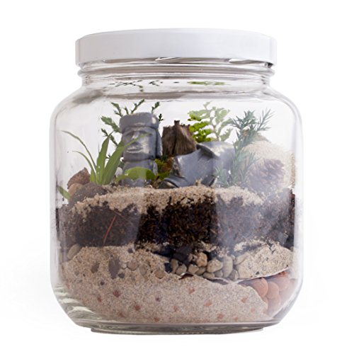 Tropical Terrarium Kit — DIY 1/2 Gal. Glass Jar Desktop G...