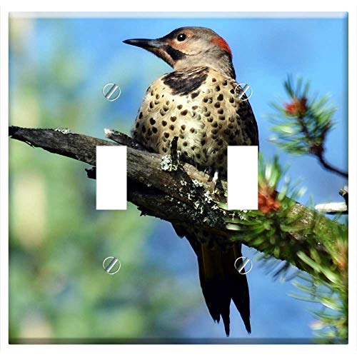 Switch Plate Double Toggle - Northern Flicker Woodpecker Bird Flicker Northern (Northern Flicker Woodpecker)