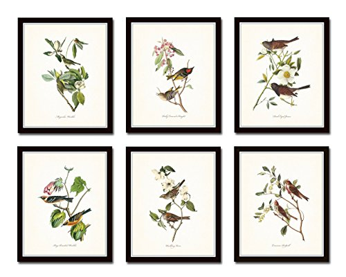 (Audubon Birds Print Set No.1 Set of 6 Vintage Bird Prints Home Decor Wall Art - Unframed)