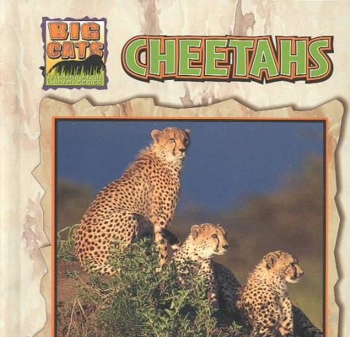 Cheetahs (Big Cats)