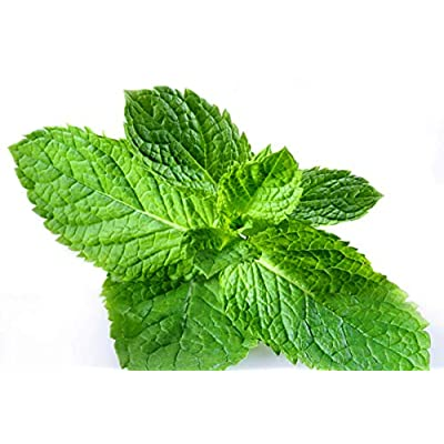 200+ ORGANICALLY Grown Peppermint Seeds Heirloom Non-GMO Herb Mentha pipareta Fragrant, Grown in The USA : Garden & Outdoor