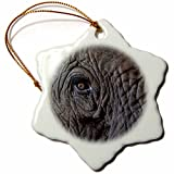 3dRose Africa, Zambia Close-up of Elephants Eye Snowflake Ornament, 3''