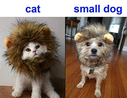 The 8 best costumes for cats