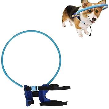 DDPP Chaleco para Perros Ciegos Chaleco de Seguridad para Mascotas ...
