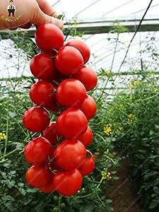 200pcs tomate de cereza, semillas de tomate fruta y verdura Semillas No OGM-delicioso de plantas económicas para la Casa y Jardín
