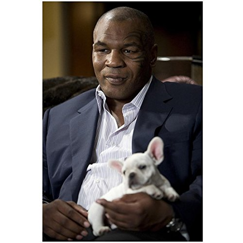 The Hangover 8 inch x 10 inch PHOTOGRAPH Mike Tyson Holding Toy Pitbull Mid D