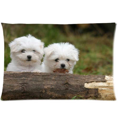 Maltese Puppies Zippered Pillow Cases Cover 20x30 Inch