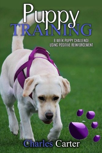 Puppy Training challenge positive reinforcement