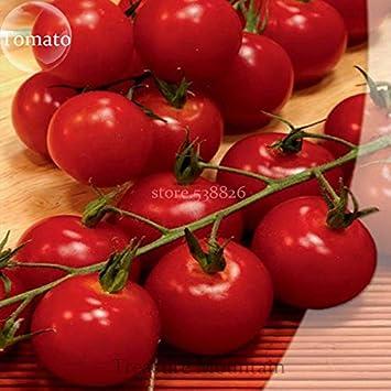Rara de la herencia Alicante (Vishenka, dulces millones) Semillas Rojo Brillante Armadura Mini