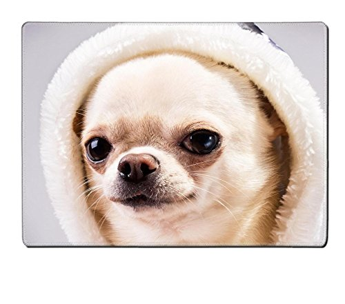 [MSD Placemat Image ID 24455689 face of chihuahua dog in hood close up portrait] (Animals Dressed Up In Halloween Costumes)
