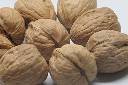 Walnut English (Walnuts,
