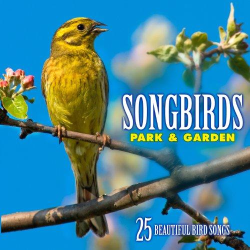 House Sparrow: Song from a Single House Sparrow