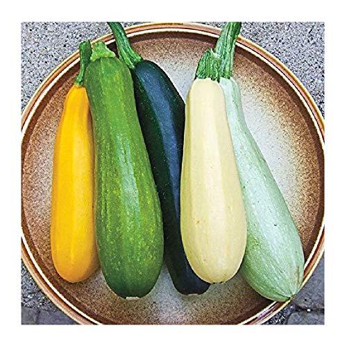 (David's Garden Seeds Zucchini Summer Melody SL9111 (Multi) 50 Non-GMO, Heirloom Seeds)