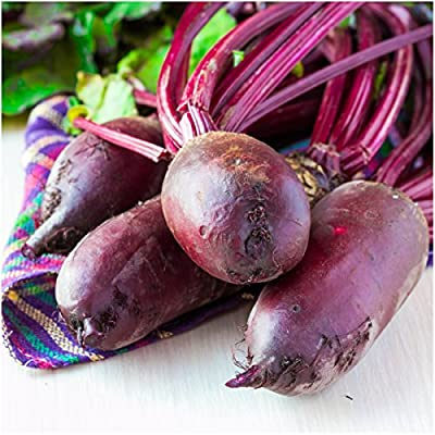 Package of 1,000 Seeds, Cylindra Beets (Beta vulgaris) Non-GMO Seeds By Seed Needs