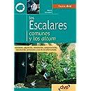 Los escalares comunes y los altum (Spanish Edition)