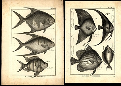 - Ichthyology c.1770-80's Fish images 18th century engraved prints lot of 8 Benard