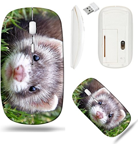 Liili Wireless Mouse White Base Travel 2.4G Wireless Mice with USB Receiver, Click with 1000 DPI for notebook, pc, laptop, computer, mac book IMAGE ID: 4168405 8 week old Chocolate Sable Ferret Kit