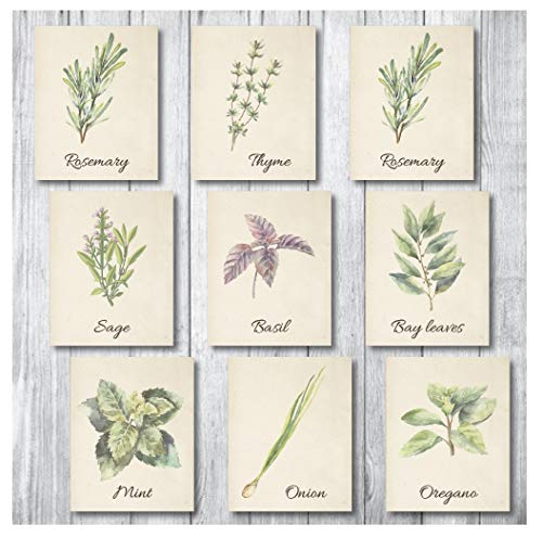 Botanical Prints Wall Decor - Kitchen Art Herbs Leaves Set -Unframed Pictures 9 PIECES 8x10 Nature Floral Plant Flower Green Small Botanicals Herb Food Watercolor Vintage Print looking Poster