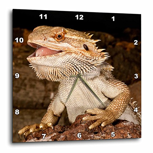 - 3dRose Bearded Dragon Lizard, Native to Australia - Na02 Dno0680 - David Northcott - Wall Clock, 10 by 10-Inch (DPP_84029_1)