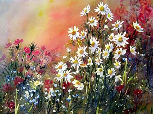 - Daisy Garden