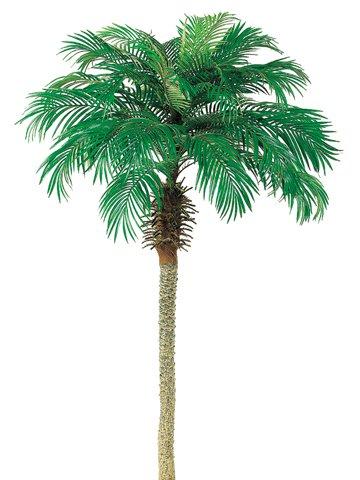 - 7' Phoenix Palm Tree (Pack of 2)