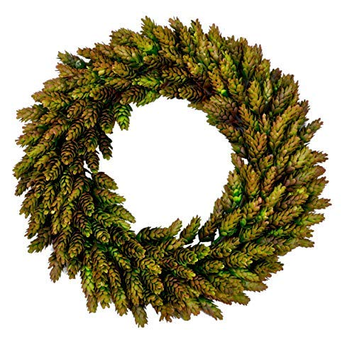 Lilypad Lake Rustic Front Door Harvest Green Beer Hops Wreath Spring Centerpiece, 16-Inch