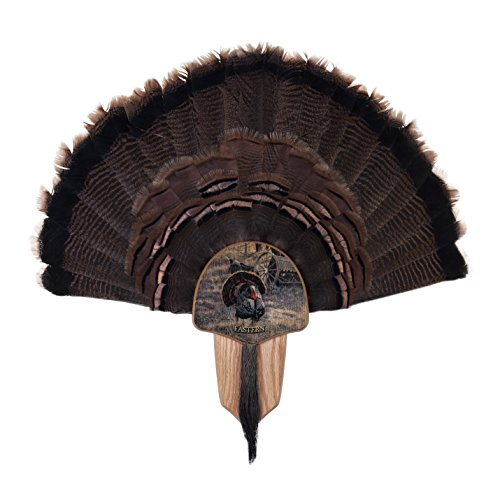 Walnut Hollow Country Turkey Fan Mount & Display Kit, Oak Grand Slam Series Eastern Turkey Image