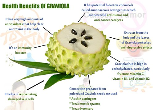 Graviola (Soursop) FRUIT Powder, 100% Natural, Pure Fruit Powder 2.2 lb (10:1 Extract) Annona Muricata Guanabana by Fruit Specialities (Image #2)