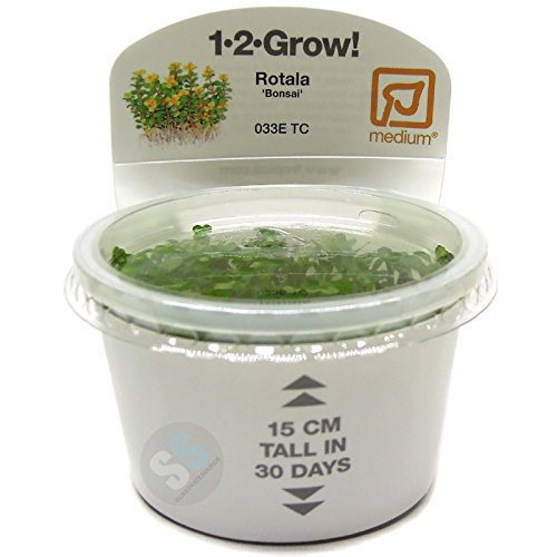 Tropica Rotala 'Bonsai' Live Aquarium Plant - In Vitro Tissue Culture 1-2-Grow!