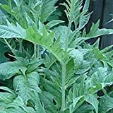 Cardoon - 180 Seeds