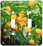 3dRose lsp_83504_2 Kumquat Fruit Tree, Agriculture Na01 Pri0002 Prisma Double Toggle Switch